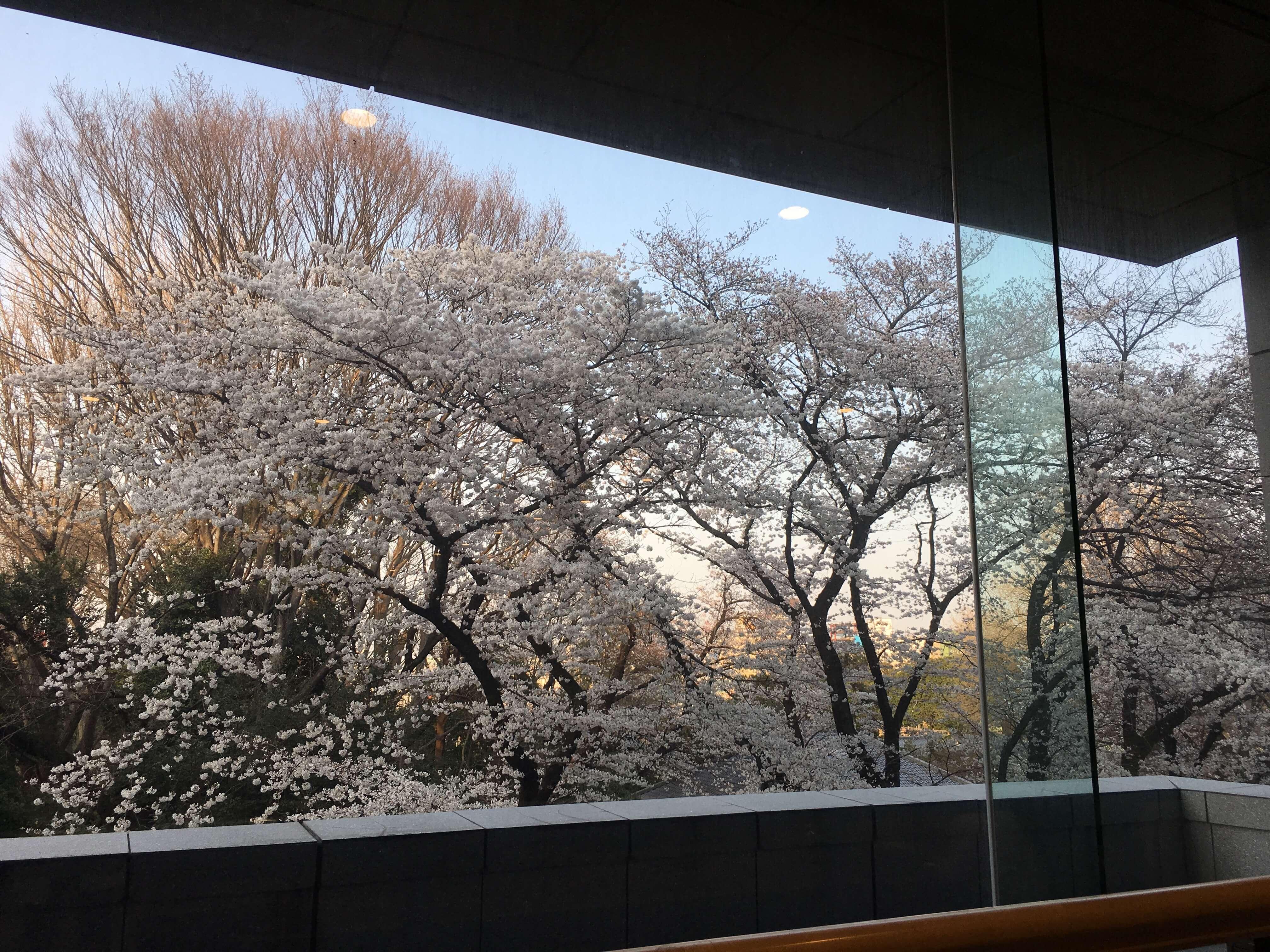 平成館から見える桜